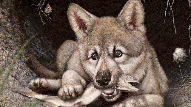 Zhùr, a jégkorszaki farkaskölyök sanyarú sorsa