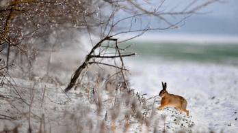 Már csak pár napig örülhetünk, vasárnapra visszatér a zord tél