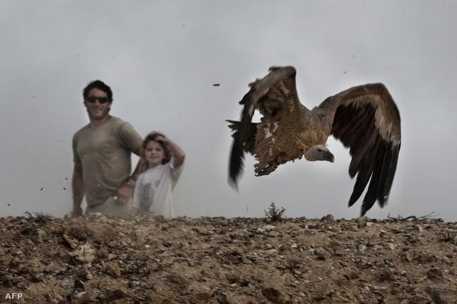 Keselyűröptetés a Negev-sivatagban