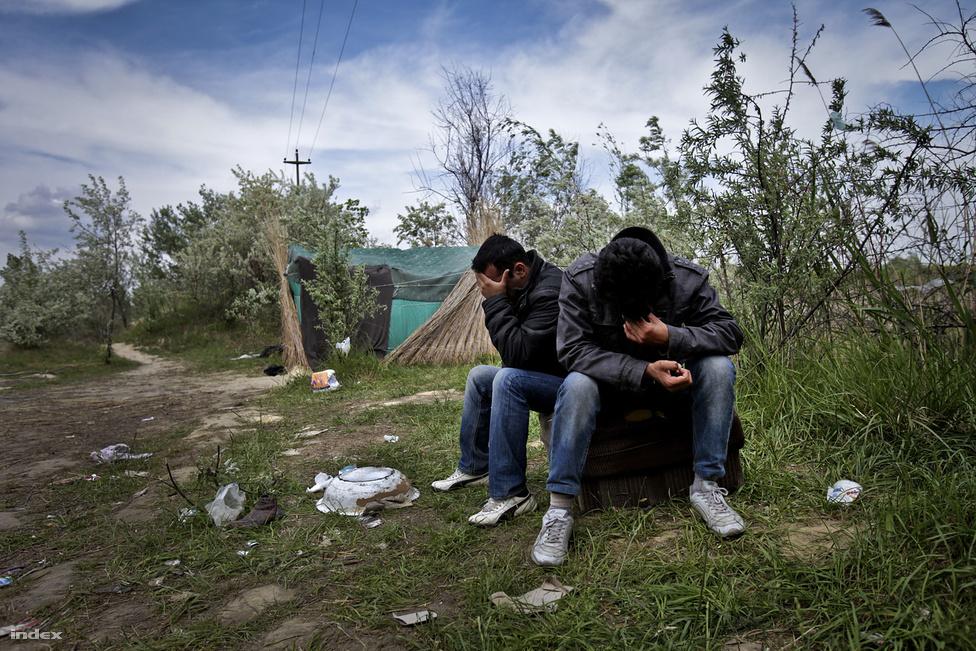 Szabadka mellett, az erdőben afgán és pakisztáni menekültek tucatjai reménykednek a titkos erdei ösvény létezésében, amelyen át Magyarországra és ezáltal a jobb életet jelentő Európai Unióba szökhetnek, ám a valóság gyakran kijózanító.