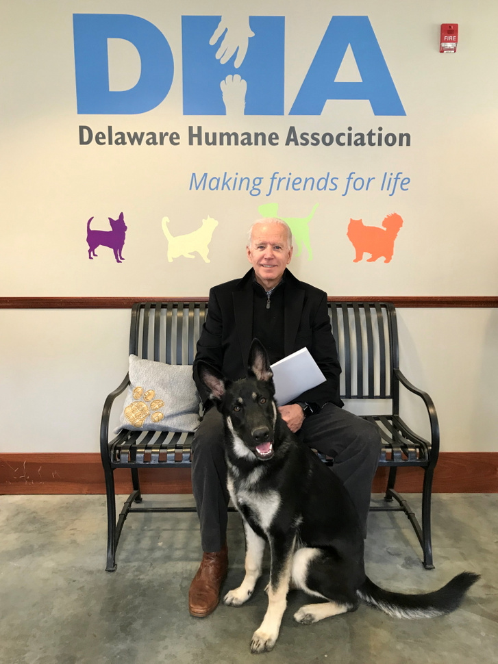 Joe Biden és kutyája, Major.