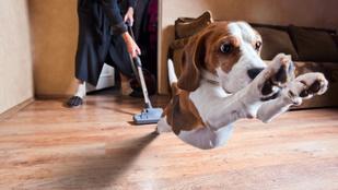 Miért félnek annyira a kutyák a porszívótól?