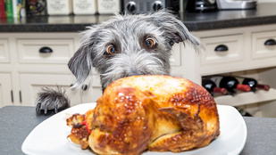 Csirketippek profiktól – ezeket tanuld meg, ha tökéletes sülteket szeretnél!