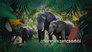 Az elefántok birodalmában a nő az úr