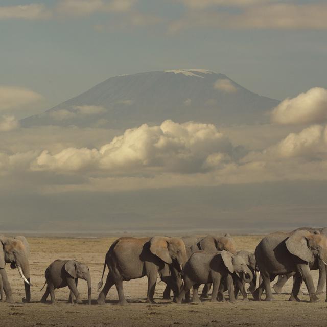 Új módszerrel figyelik meg a veszélyeztetett állatokat: épp olyan pontos munkát végez, mint az emberek