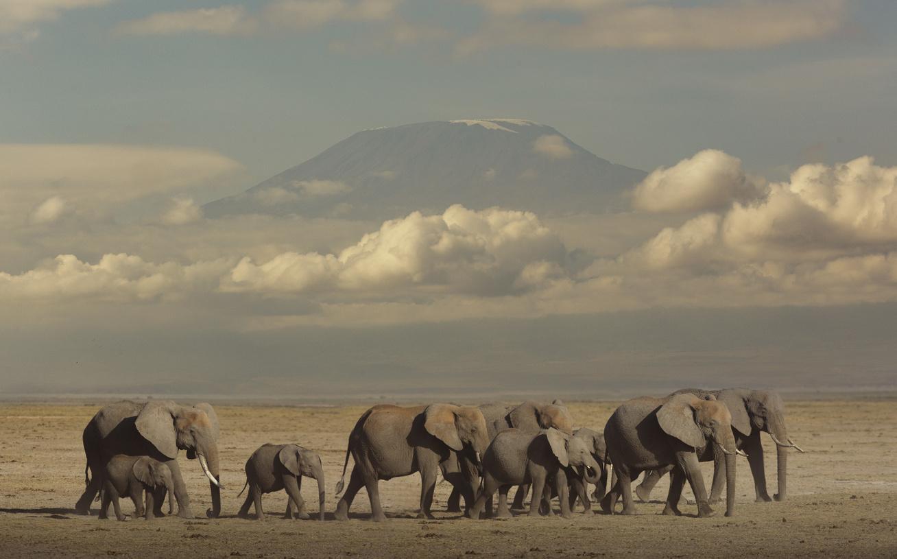 afrikai-elefantok
