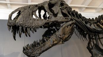 Ekkora lehetett egy bébi Tirannoszaurusz