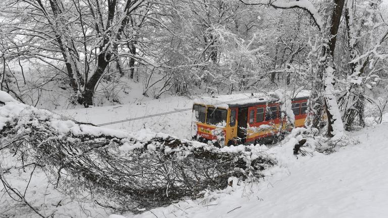 Országszerte kidőlt fák akadályozzák a közlekedést