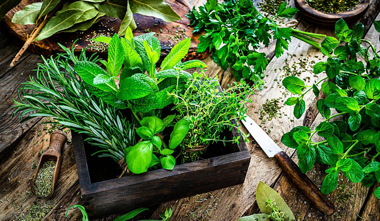 gyógynövények nyitó