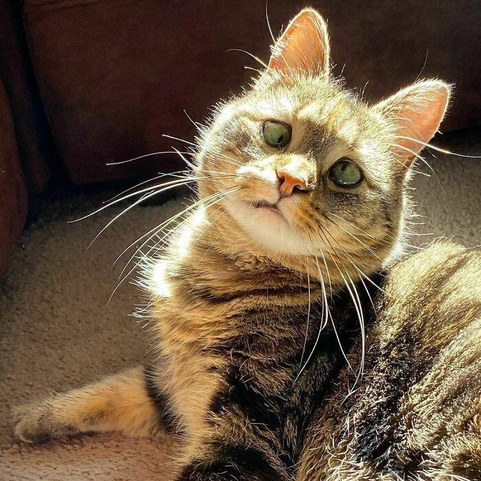 Gazdája szerint Olive kissé visszafogottabb, mint egy tipikus macska. Nagyon szégyenlős, de ha egyszer megismer valakit, és megnyílik neki, akkor abszolút kedves.
