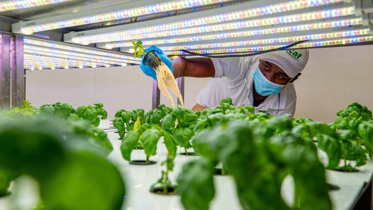 Automatizált növénytermesztési eljáráson dolgoznak a SZTAKI-ban