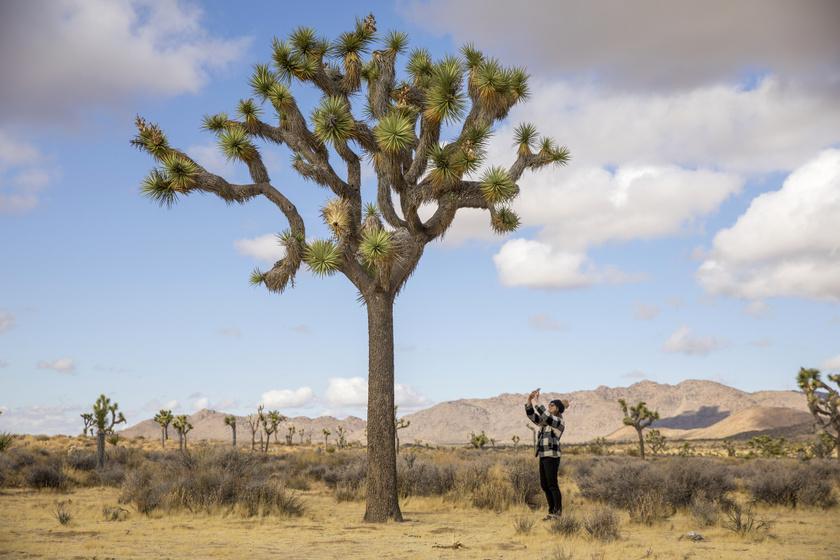 A park névadója a Joshua- vagy Józsué-faként ismert pálmaliliom, a Yucca brevifolia, ami a Mojave-sivatagban őshonos. A különleges növény legkorosabb tagjai meghaladhatják a 6-8 méteres magasságot is, és akár száz évig is élhetnek. Krémszínű virágokat hoz.