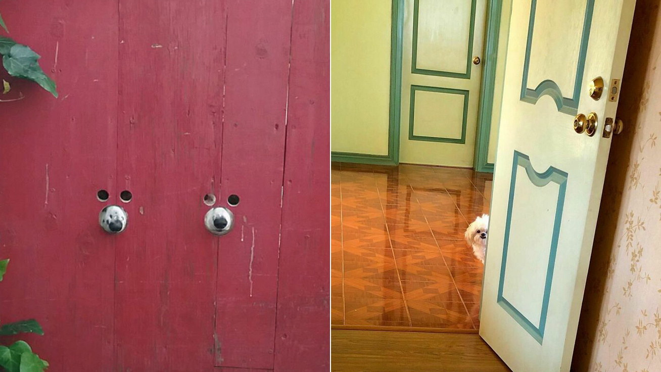 kíváncsi-kutyák-borító