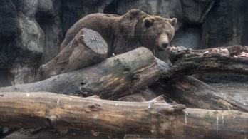 A tavaszunk függhet a mai időjárástól: lássuk a medvét!