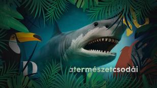 A valaha élt legnagyobb cápa felfalta testvéreit az anyaméhben
