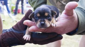 Be kell jelenteni, ha valaki kutyakereskedelemmel foglalkozik