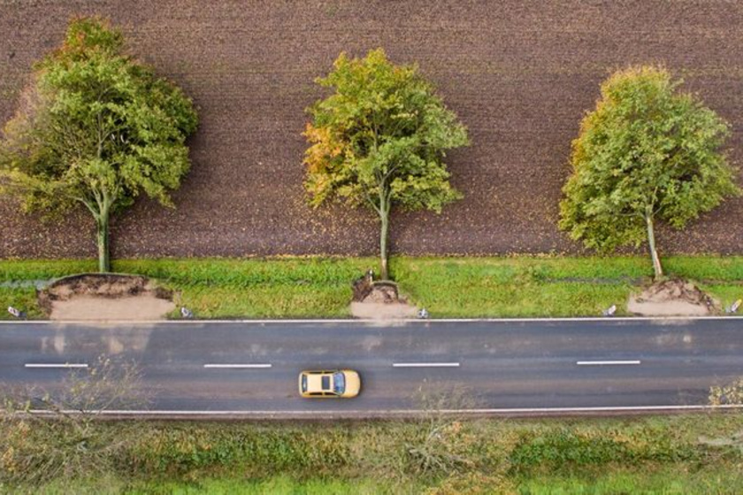Első pillantásra nehéz rájönni, mi történik a képen, de eláruljuk, hogy felülnézetből van fotózva az út, és a hurrikán által kidöntött fák fekszenek szép sorban mellette.
