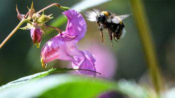 Méhecskehotel: szobákat akarnak kiadni magányos méheknek