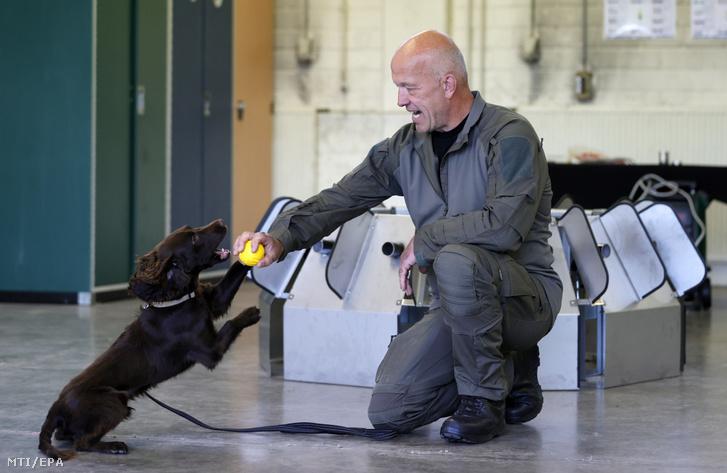 Joe, egy koronavírust felderítő kutya oktatás közben a német hadsereg szolgálati kutyákat képző iskolájában, a Koblenz közelében fekvő Ulmenben 2020. július 23-án.