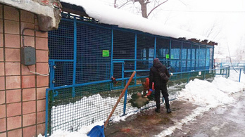 Gyilkos tigris Ukrajnában