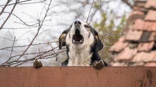 Mit tegyek, hogy ne ugasson meg a szomszéd kutyája?