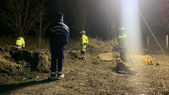 A veresegyházi Medveotthon gondozója ásta el a dögtemetőben a párját