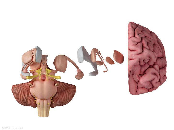 Agyi anatómia: az amigdala és sok minden más