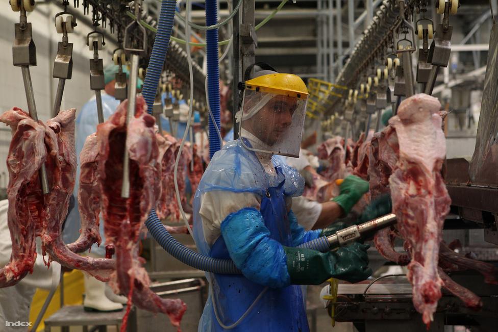 Pulykákat tisztít egy dolgozó a Gallicoop szarvasi üzemében szeptember 27-én. Az ősz a magyar húsipar történelmi válságát hozta magával, ám a pulykahús drágulása csak a kezdet volt. Negyedik, az év utolsó három hónapját összegző Nagyképünkben a végül összeroppanó húsüzemekkel is találkozhatnak.