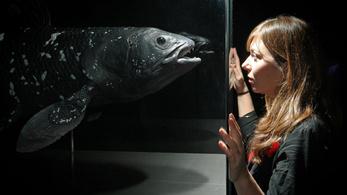 Mégsem élő fosszília a bojtosúszós hal