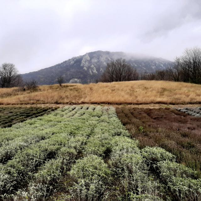 Gyógynövények sorakoznak a Pilis lábánál: Kesztölc pálos gyógynövénykertje varázslatos látványt nyújt