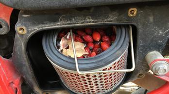 Rágcsáló pakolta tele a légszűrőt bogyókkal és magokkal