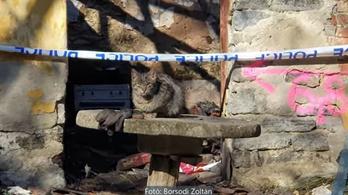 A törmeléket kapargató macska segített megtalálni a holttestet