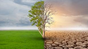 A Nagy Zöld Fal mentheti meg Afrikát a klímaváltozástól, és ez nem csak nekik fontos