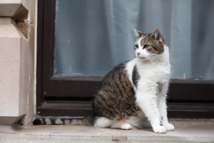 Larry, a macska