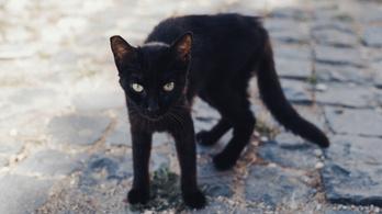 Négy év után hazatért az eltűnt macska