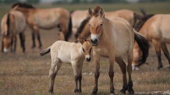 Lovas nemzetnek lovas film és lovas pályázat