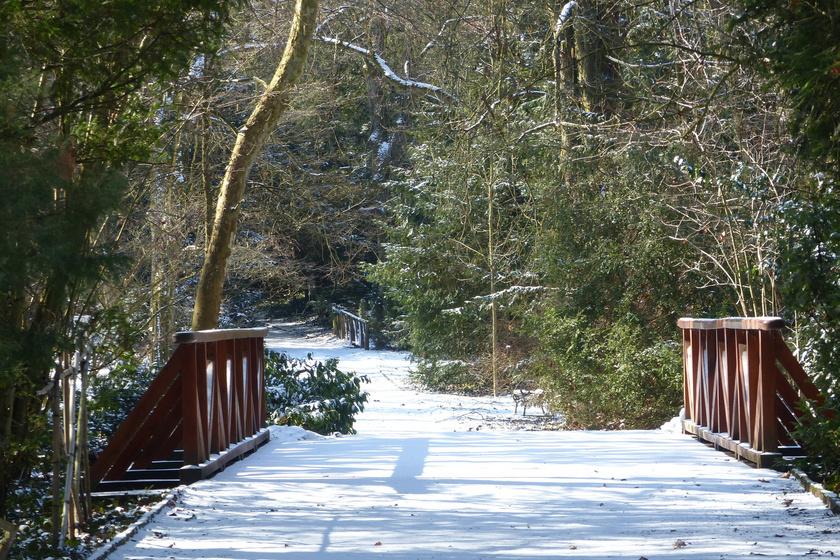 Itt forgatták az Abigélt és A palacsintás királyt: a vácrátóti arborétum télen is gyönyörű