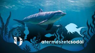 Gondoltad volna, hogy a delfinek konkrétan a nevükön szólítják egymást?