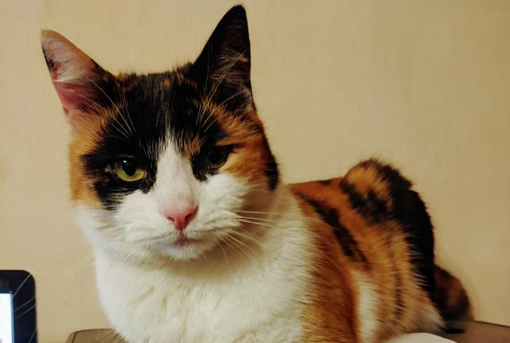 Bella egy igazi macska, és becsszó, nem tweetelt pornót török nyelven a Twitteren. De ilyen macskát bárki generálhat GAN-technológiával (Fénykép: Herpai Gergely)