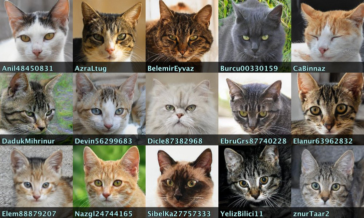 """Ezek nem valódi macskák, hanem GAN-technológiával generált """"kamumacskák"""" képei (Forrás: Conspirador Norteño)"""