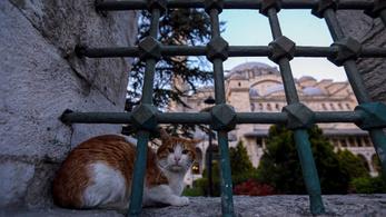 Törökül beszélő mesterséges macskák nyüzsögnek a Twitteren