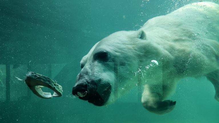 Budapest ostroma óta nem élt meg ilyen nehéz napokat a fővárosi állatkert