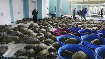 Fagy után indult a teknősmentő akció az Egyesült Államokban