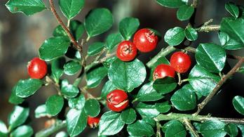 Légszennyezést felfogó szupernövényeket azonosítottak