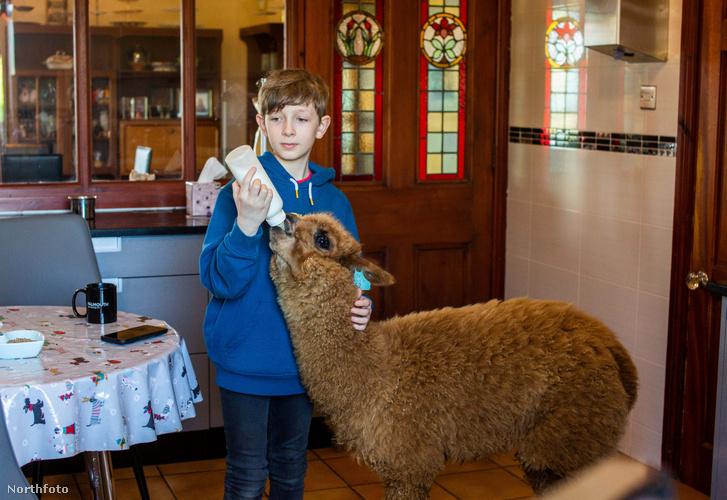 tk3s swns pet alpaca 05