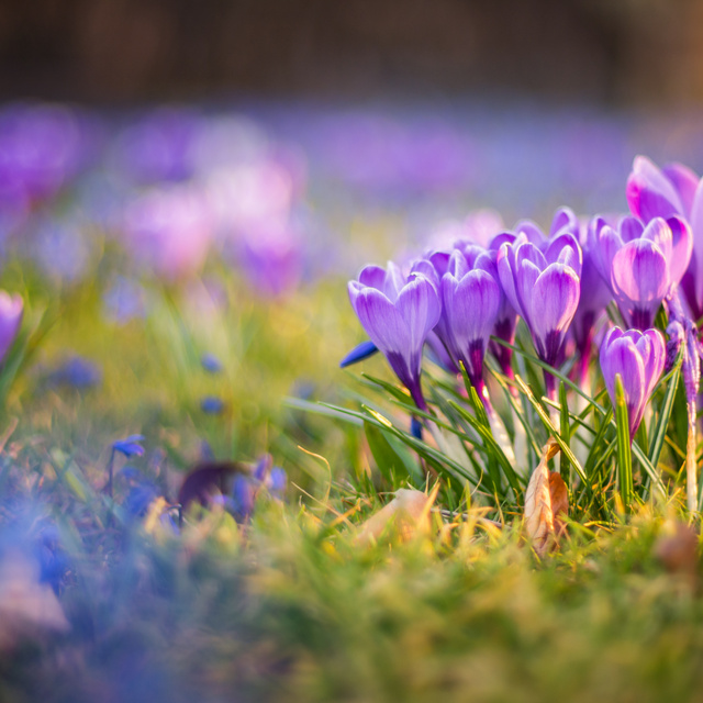 A tél utolsó hetében inkább kora tavasz lesz: kellemes idővel búcsúzik a február