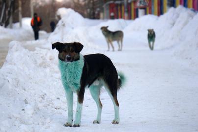 zold-kutya