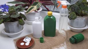 Így védd meg a szobanövényeidet a kártevőktől: szakértő válaszol