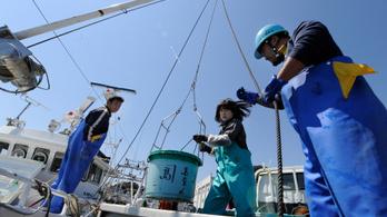 Még mindig sugároznak a halak Fukusima mellett