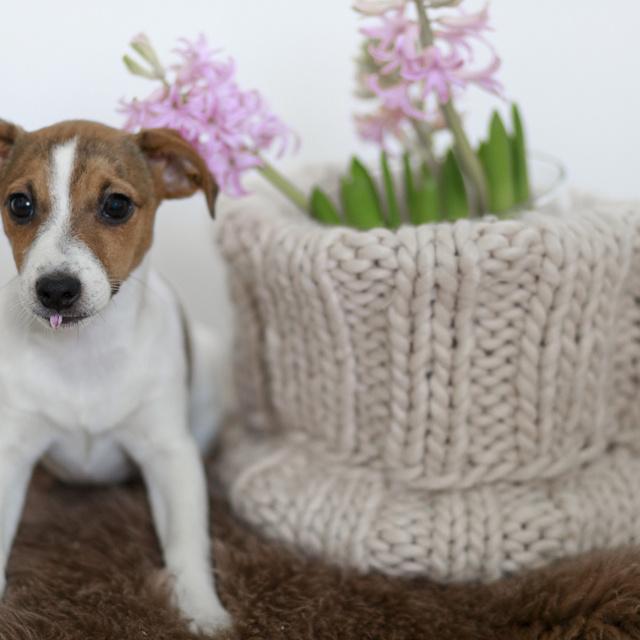 8 súlyosan mérgező szobanövény, amivel nem árt az óvatosság, ha cicát vagy kutyát tartasz